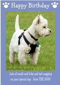 "West Highland White Terrier-Happy Birthday - ""From The Dog"" Theme"